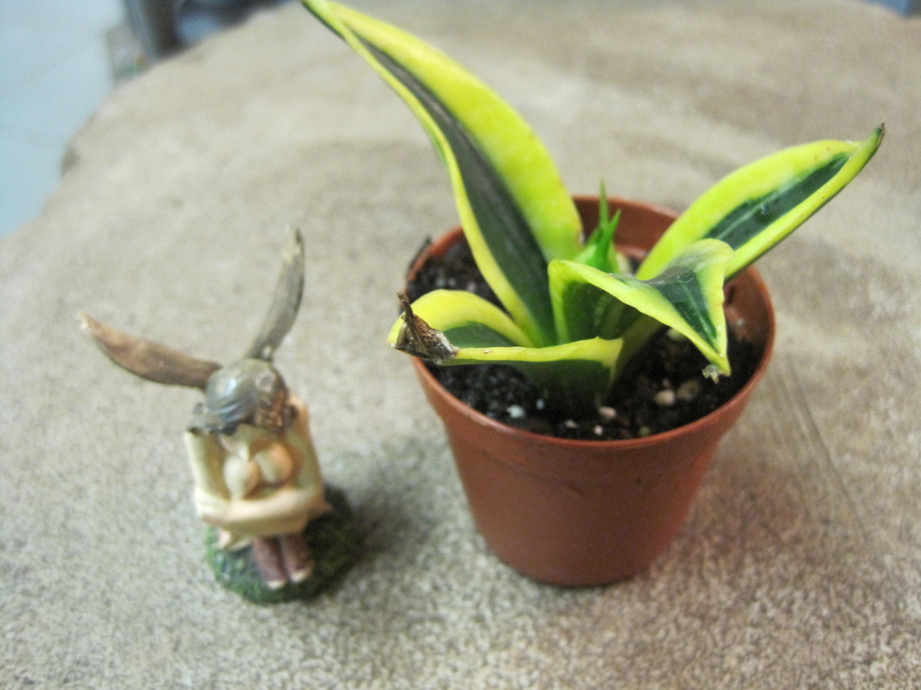 Terrarium And Miniature Garden Plants Otten Bros Garden Center