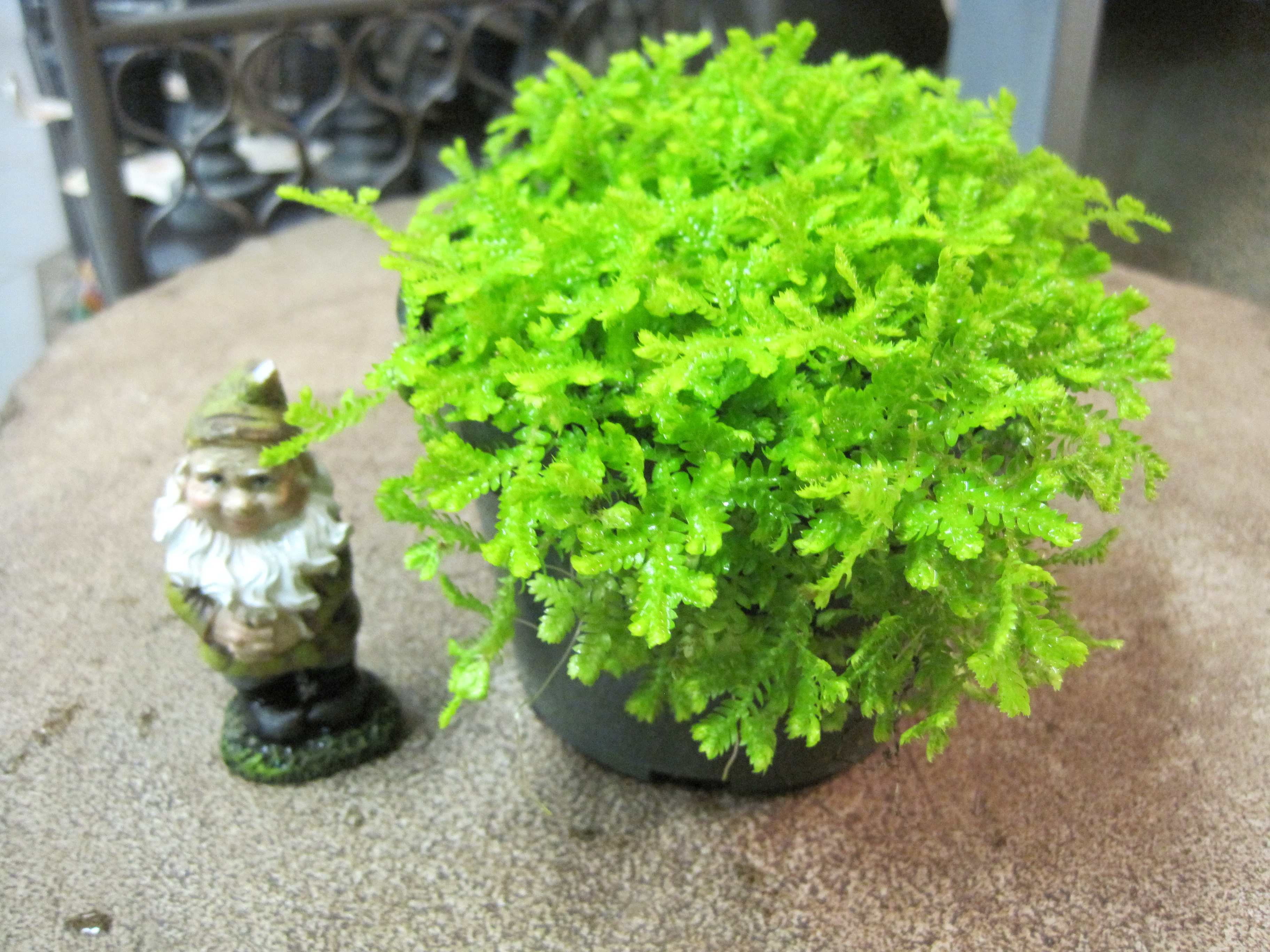 Terrarium And Miniature Garden Plants