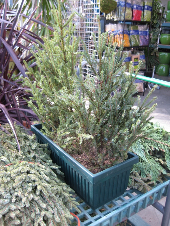 Begin with one taller spruce tip in the center and shorter tips to the sides.