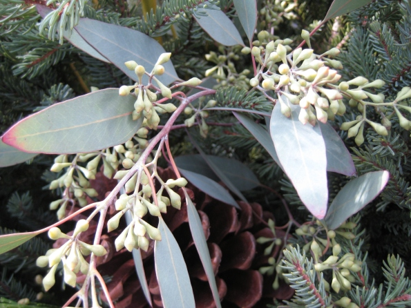 Seeded Eucalyptus and Pine cones.
