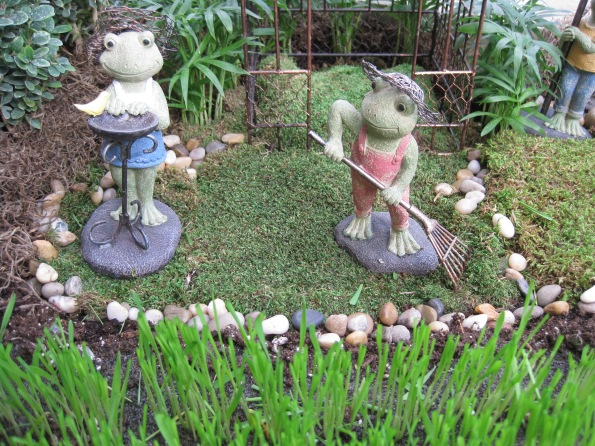 Frog family in their yard